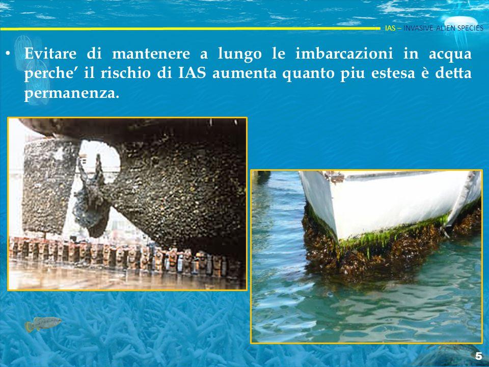 IAS – INVASIVE ALIEN SPECIES Evitare di mantenere a lungo le imbarcazioni in acqua perche' il rischio di IAS aumenta quanto piu estesa è detta permane