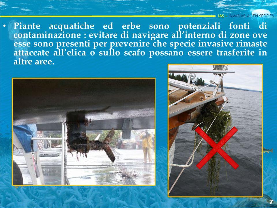 IAS – INVASIVE ALIEN SPECIES Piante acquatiche ed erbe sono potenziali fonti di contaminazione : evitare di navigare all'interno di zone ove esse sono