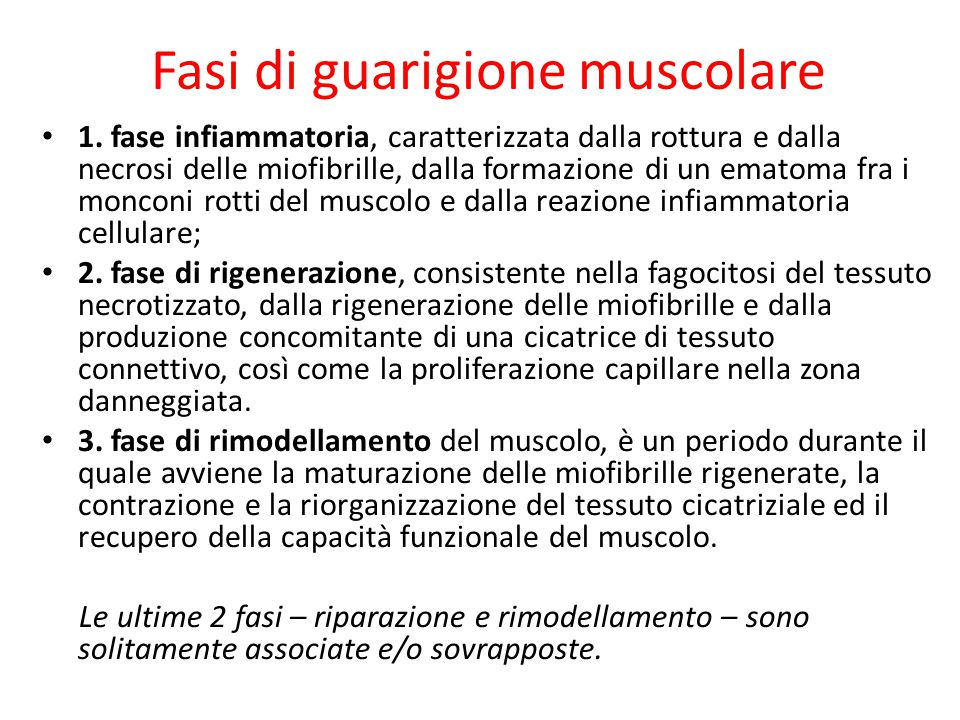Fasi di guarigione muscolare 1. fase infiammatoria, caratterizzata dalla rottura e dalla necrosi delle miofibrille, dalla formazione di un ematoma fra