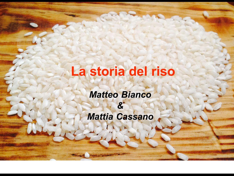 La storia del riso Matteo Bianco & Mattia Cassano