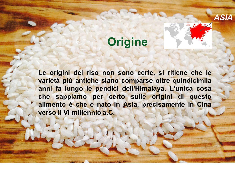 Origine ffffqqqqqqqqq Origine Le origini del riso non sono certe, si ritiene che le varietà più antiche siano comparse oltre quindicimila anni fa lung