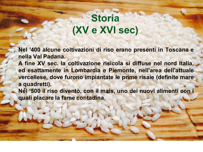 Storia (XV e XVI sec) Nel '400 alcune coltivazioni di riso erano presenti in Toscana e nella Val Padana. A fine XV sec. la coltivazione risicola si di