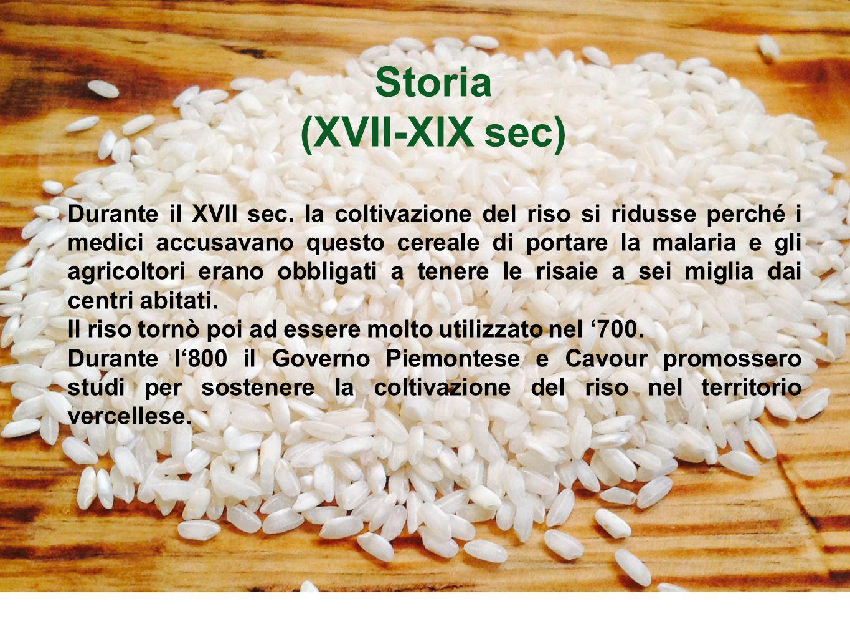 Storia (XVII-XIX sec) Durante il XVII sec. la coltivazione del riso si ridusse perché i medici accusavano questo cereale di portare la malaria e gli a