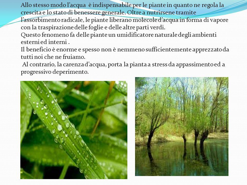 Allo stesso modo l'acqua è indispensabile per le piante in quanto ne regola la crescita e lo stato di benessere generale. Oltre a nutrirsene tramite l