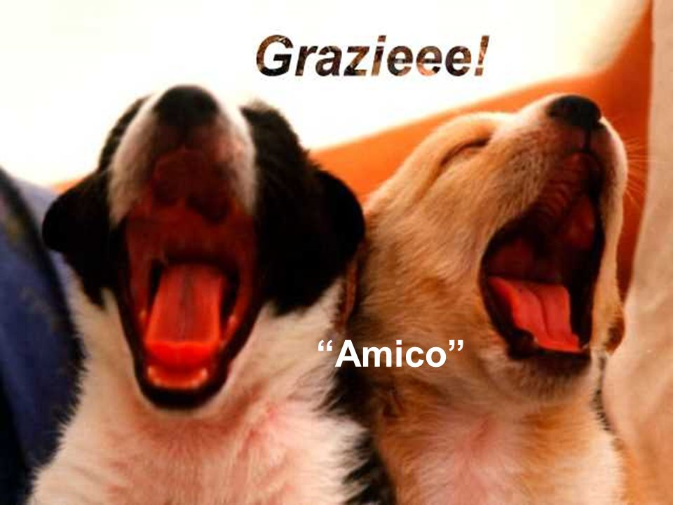 Un omaggio: Il suo animale domestico Testo: Professione di scrittore ignorante ( Il tuo cane!) Musica: Ernesto Cortazar.