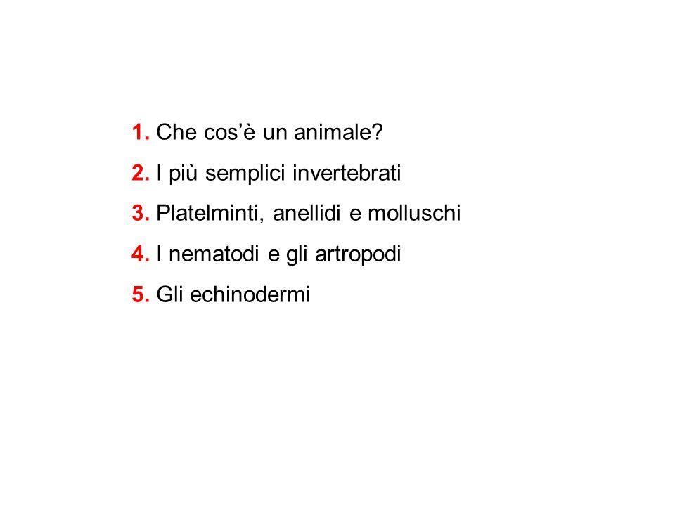 1. Che cos'è un animale? 2. I più semplici invertebrati 3. Platelminti, anellidi e molluschi 4. I nematodi e gli artropodi 5. Gli echinodermi
