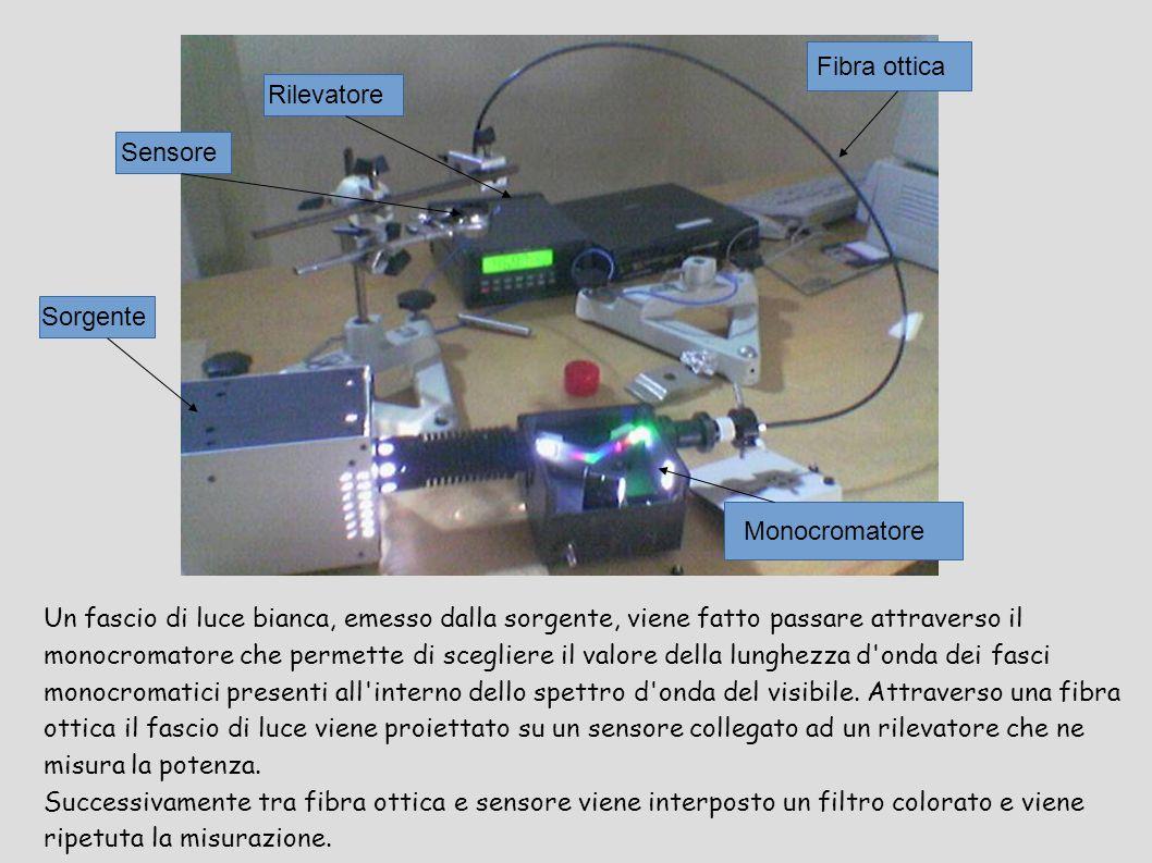 Un fascio di luce bianca, emesso dalla sorgente, viene fatto passare attraverso il monocromatore che permette di scegliere il valore della lunghezza d onda dei fasci monocromatici presenti all interno dello spettro d onda del visibile.