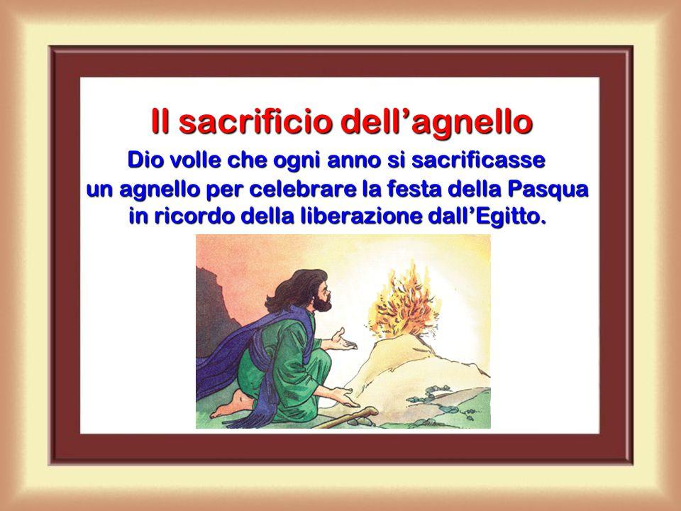 In un sacrificio il sacerdote offre a Dio una cosa. Il sacerdote offre il sacrificio in nome nostro, come segno di sottomissione a Dio, di rendimento