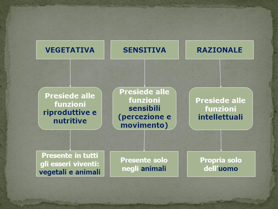 VEGETATIVASENSITIVARAZIONALE Presiede alle funzioni riproduttive e nutritive Presiede alle funzioni sensibili (percezione e movimento) Presiede alle f