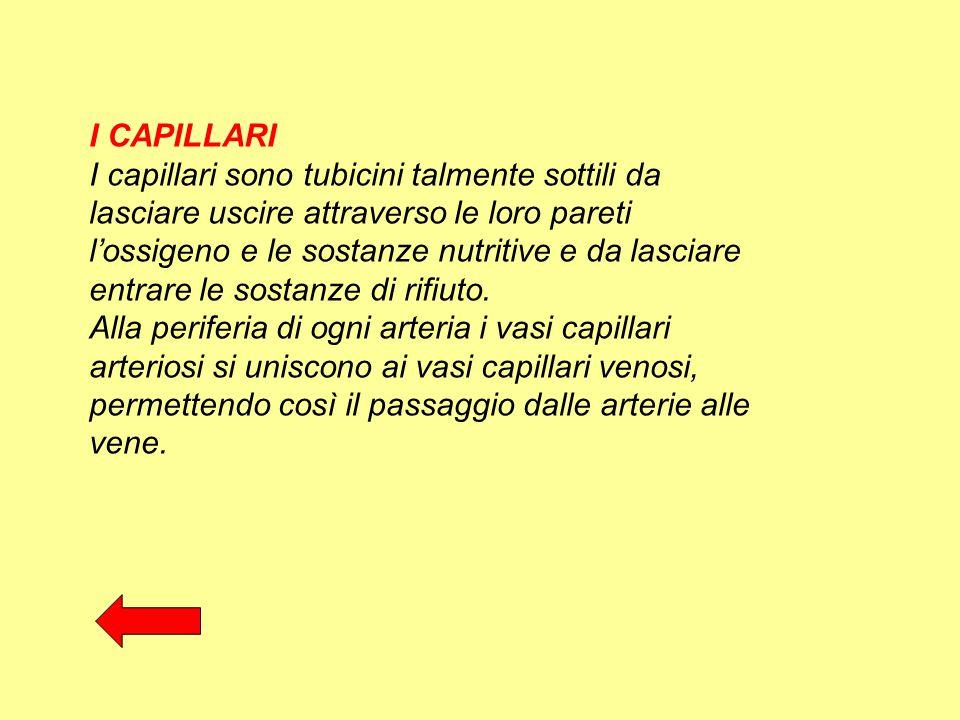 I CAPILLARI I capillari sono tubicini talmente sottili da lasciare uscire attraverso le loro pareti l'ossigeno e le sostanze nutritive e da lasciare e