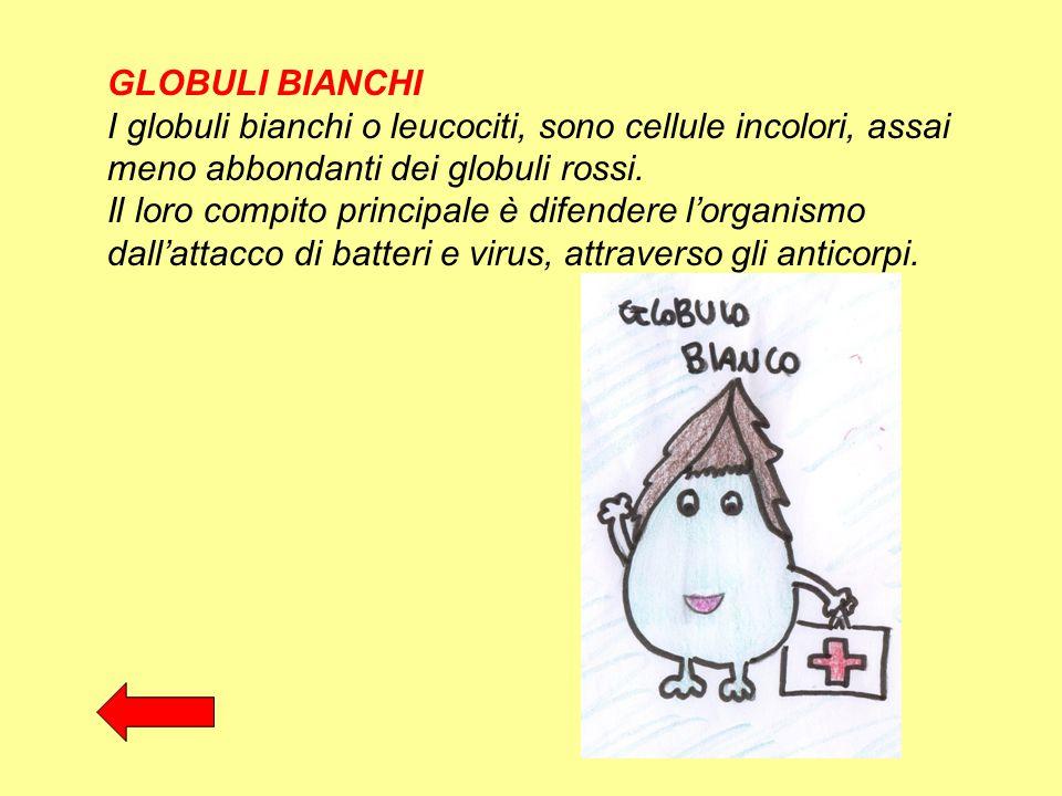 GLOBULI BIANCHI I globuli bianchi o leucociti, sono cellule incolori, assai meno abbondanti dei globuli rossi. Il loro compito principale è difendere