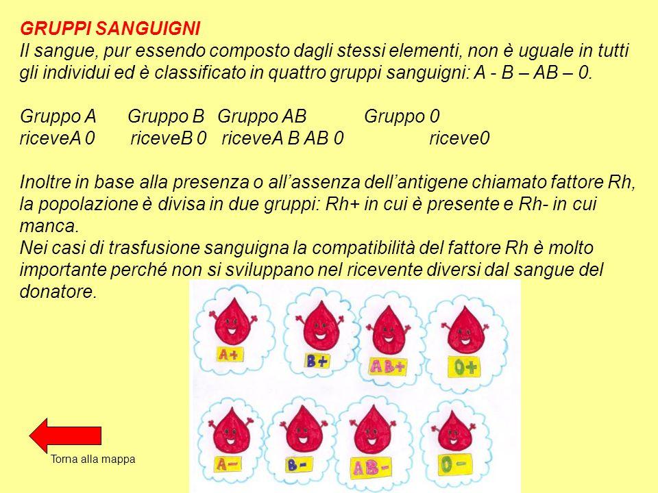 GRUPPI SANGUIGNI Il sangue, pur essendo composto dagli stessi elementi, non è uguale in tutti gli individui ed è classificato in quattro gruppi sanguigni: A - B – AB – 0.