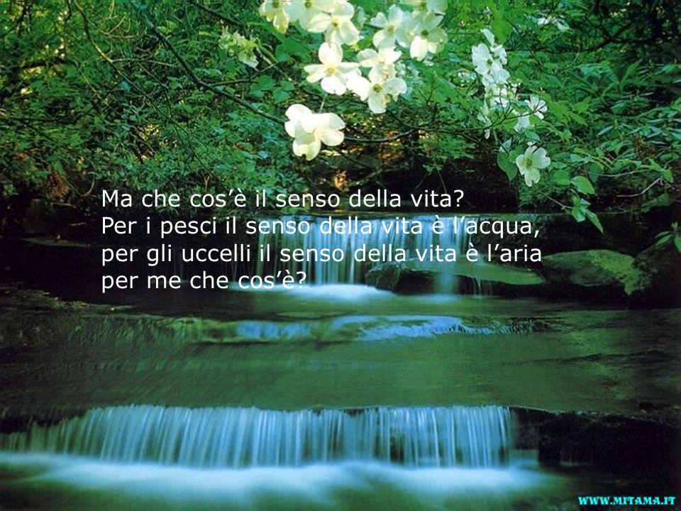 Ma che cos'è il senso della vita? Per i pesci il senso della vita è l'acqua, per gli uccelli il senso della vita è l'aria per me che cos'è?
