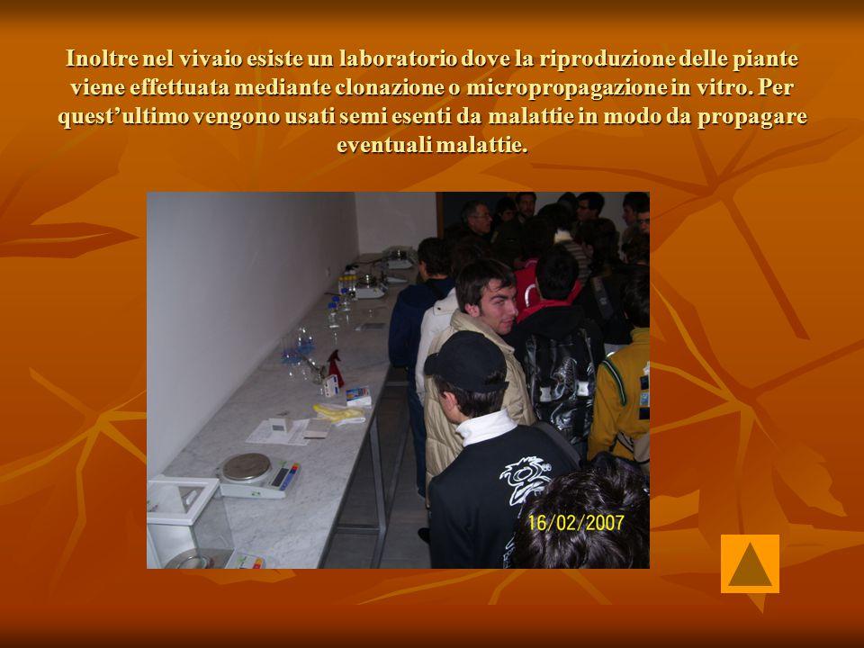 Inoltre nel vivaio esiste un laboratorio dove la riproduzione delle piante viene effettuata mediante clonazione o micropropagazione in vitro. Per ques