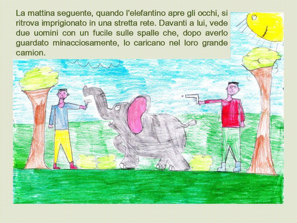 La mattina seguente, quando l'elefantino apre gli occhi, si ritrova imprigionato in una stretta rete. Davanti a lui, vede due uomini con un fucile sul