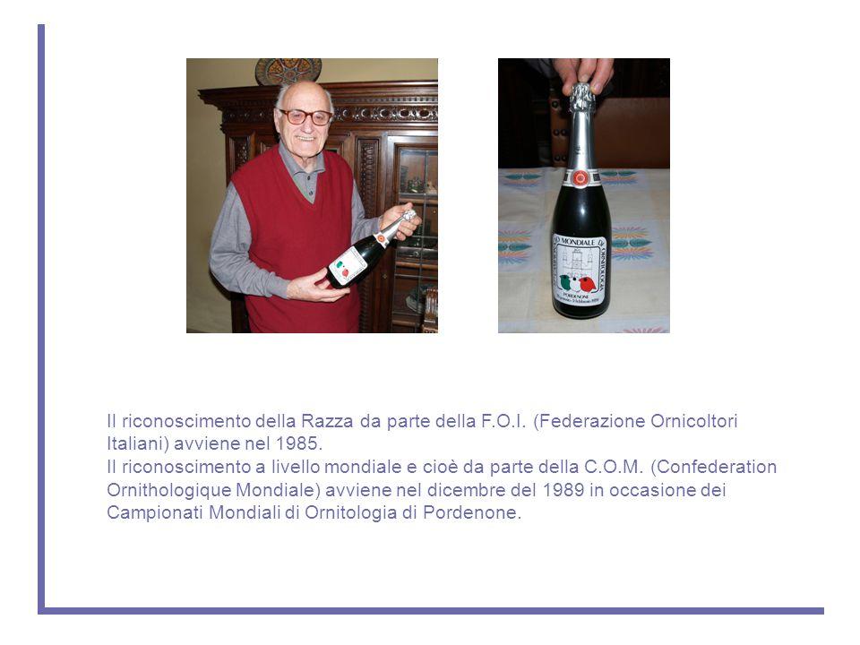 Il riconoscimento della Razza da parte della F.O.I. (Federazione Ornicoltori Italiani) avviene nel 1985. Il riconoscimento a livello mondiale e cioè d
