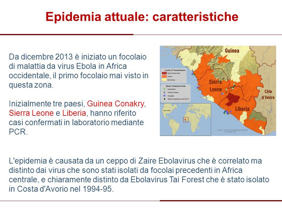 Epidemia attuale: caratteristiche Da dicembre 2013 è iniziato un focolaio di malattia da virus Ebola in Africa occidentale, il primo focolaio mai vist