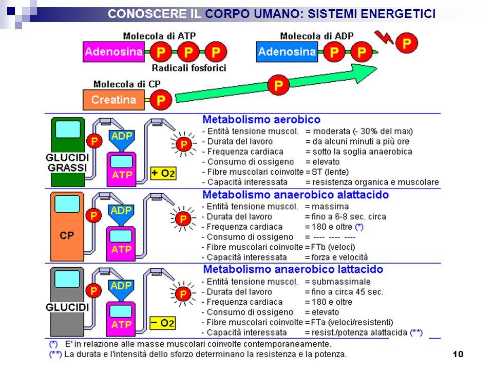 10 CONOSCERE IL CORPO UMANO: SISTEMI ENERGETICI