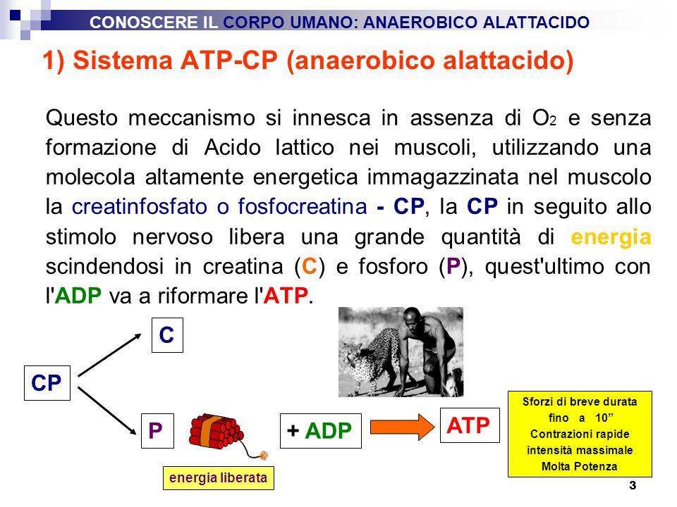 3 1) Sistema ATP-CP (anaerobico alattacido) Questo meccanismo si innesca in assenza di O 2 e senza formazione di Acido lattico nei muscoli, utilizzand