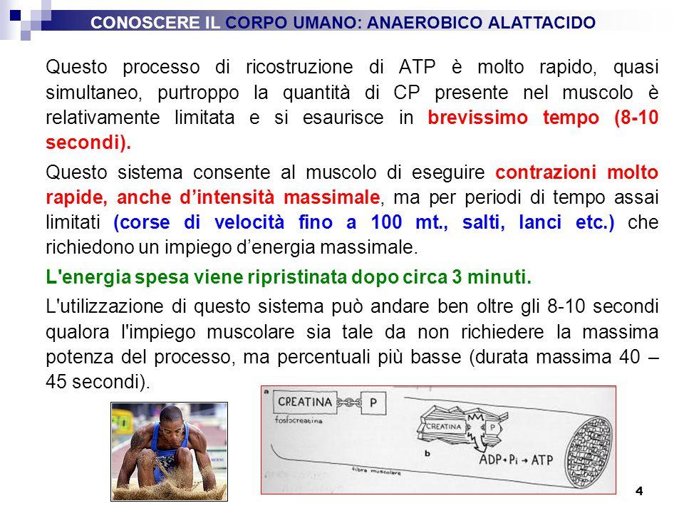 4 Questo processo di ricostruzione di ATP è molto rapido, quasi simultaneo, purtroppo la quantità di CP presente nel muscolo è relativamente limitata