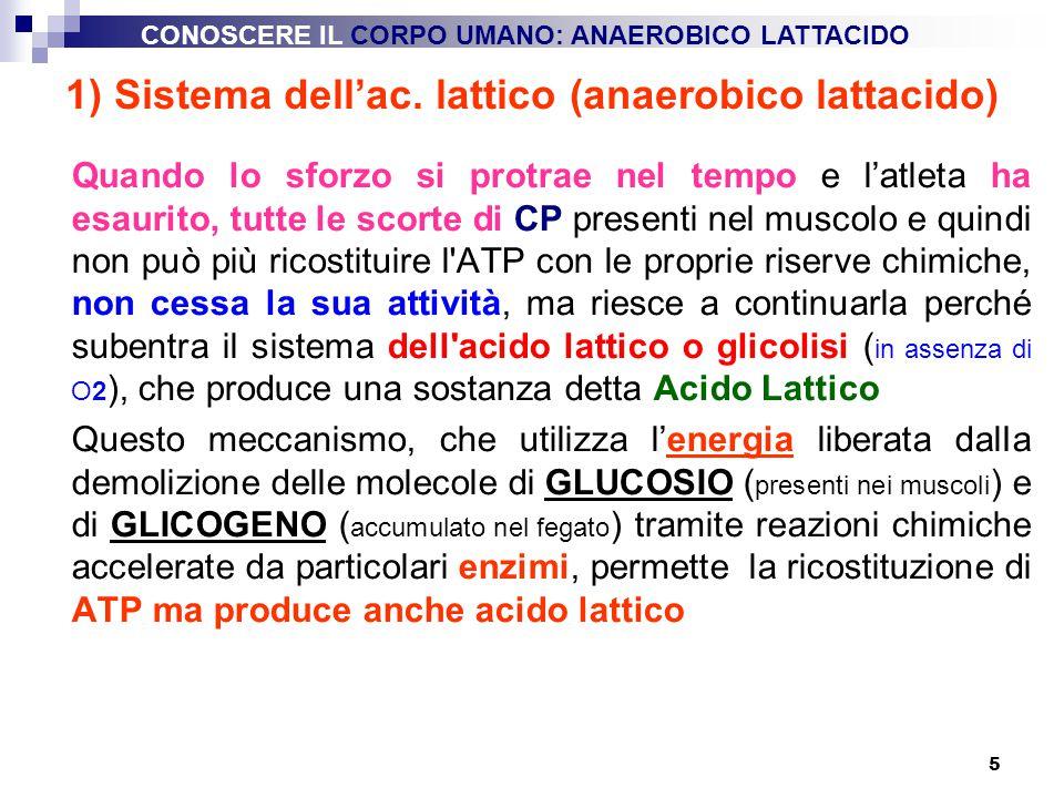 5 1) Sistema dell'ac. lattico (anaerobico lattacido) Quando lo sforzo si protrae nel tempo e l'atleta ha esaurito, tutte le scorte di CP presenti nel