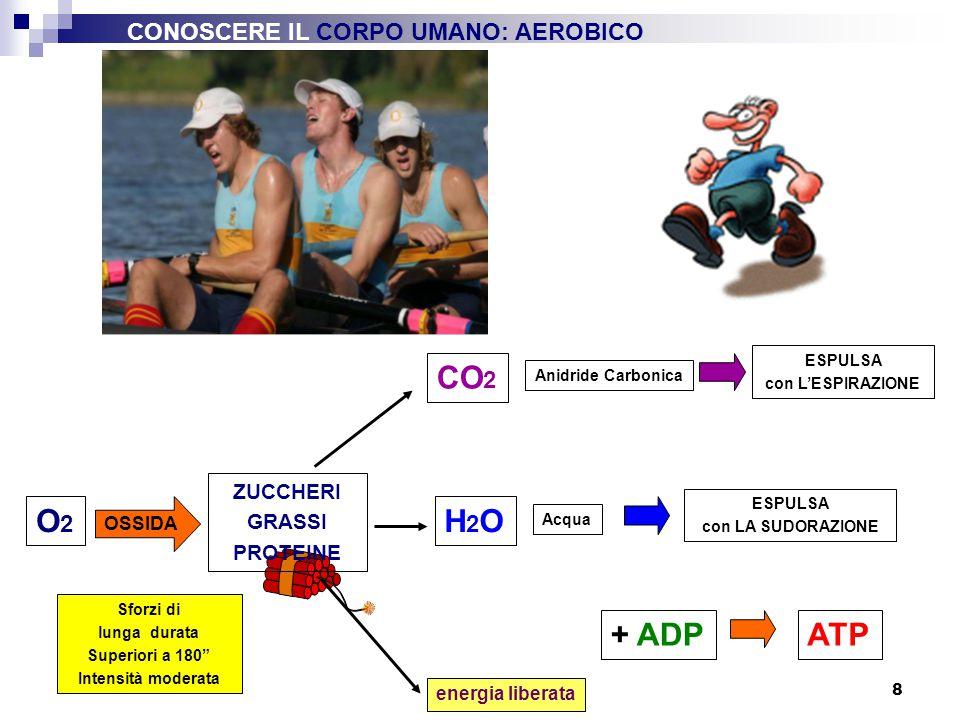 "8 O2O2 + ADP energia liberata ATP Sforzi di lunga durata Superiori a 180"" Intensità moderata OSSIDA ZUCCHERI GRASSI PROTEINE CO 2 ESPULSA con L'ESPIRA"
