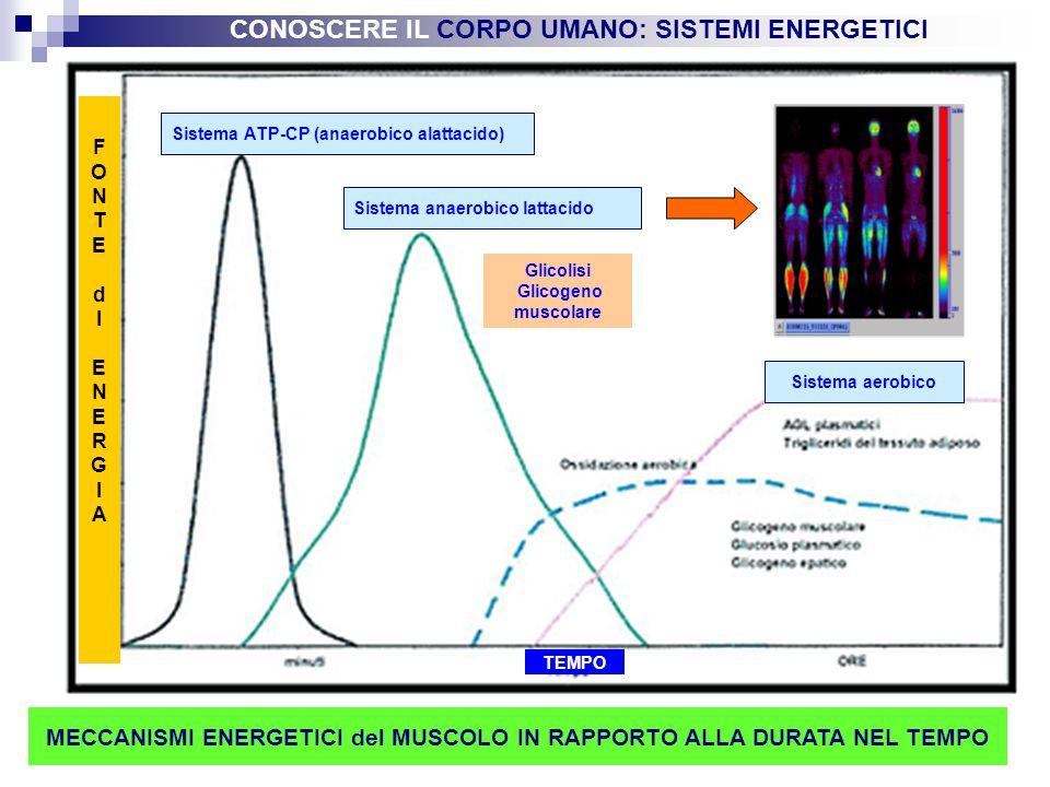 9 Sistema ATP-CP (anaerobico alattacido) Sistema anaerobico lattacido Glicolisi Glicogeno muscolare Sistema aerobico FONTEdIENERGIAFONTEdIENERGIA MECC