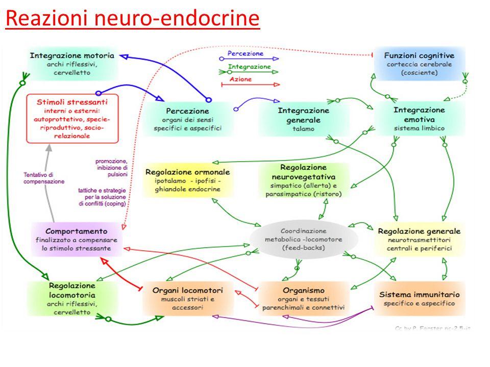 Reazioni neuro-endocrine