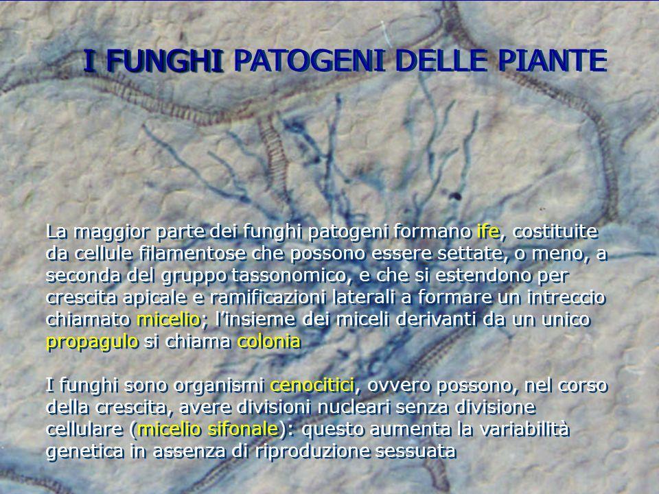 I FUNGHI I FUNGHI PATOGENI DELLE PIANTE La maggior parte dei funghi patogeni formano ife, costituite da cellule filamentose che possono essere settate