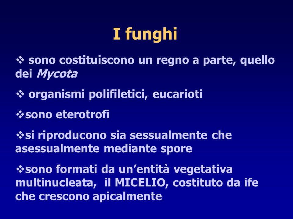 I funghi  sono costituiscono un regno a parte, quello dei Mycota  organismi polifiletici, eucarioti  sono eterotrofi  si riproducono sia sessualme