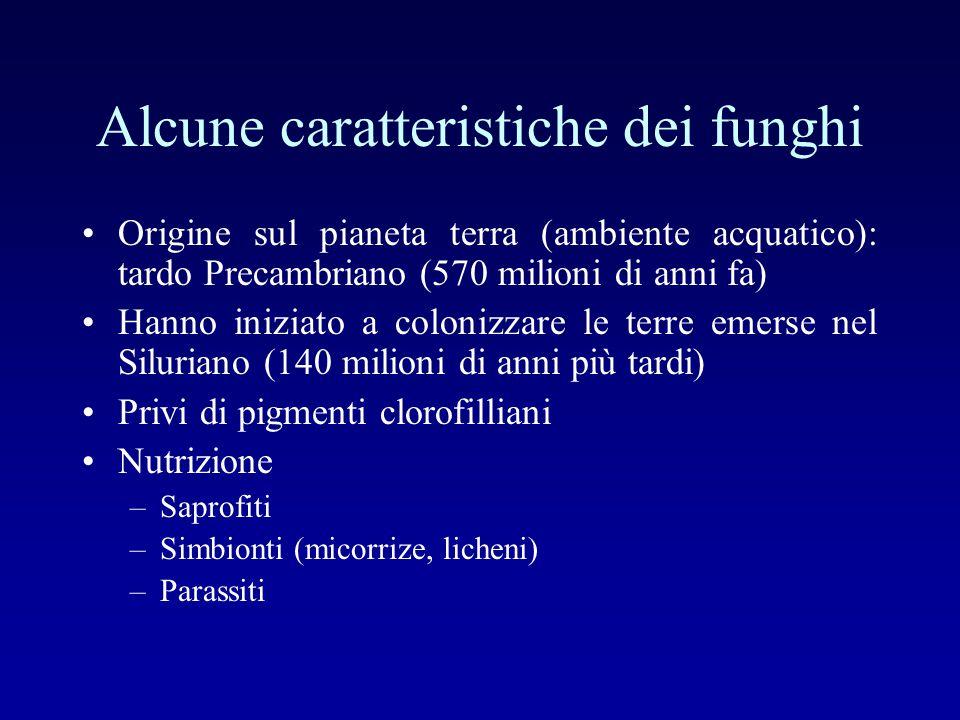Alcune caratteristiche dei funghi Origine sul pianeta terra (ambiente acquatico): tardo Precambriano (570 milioni di anni fa) Hanno iniziato a coloniz