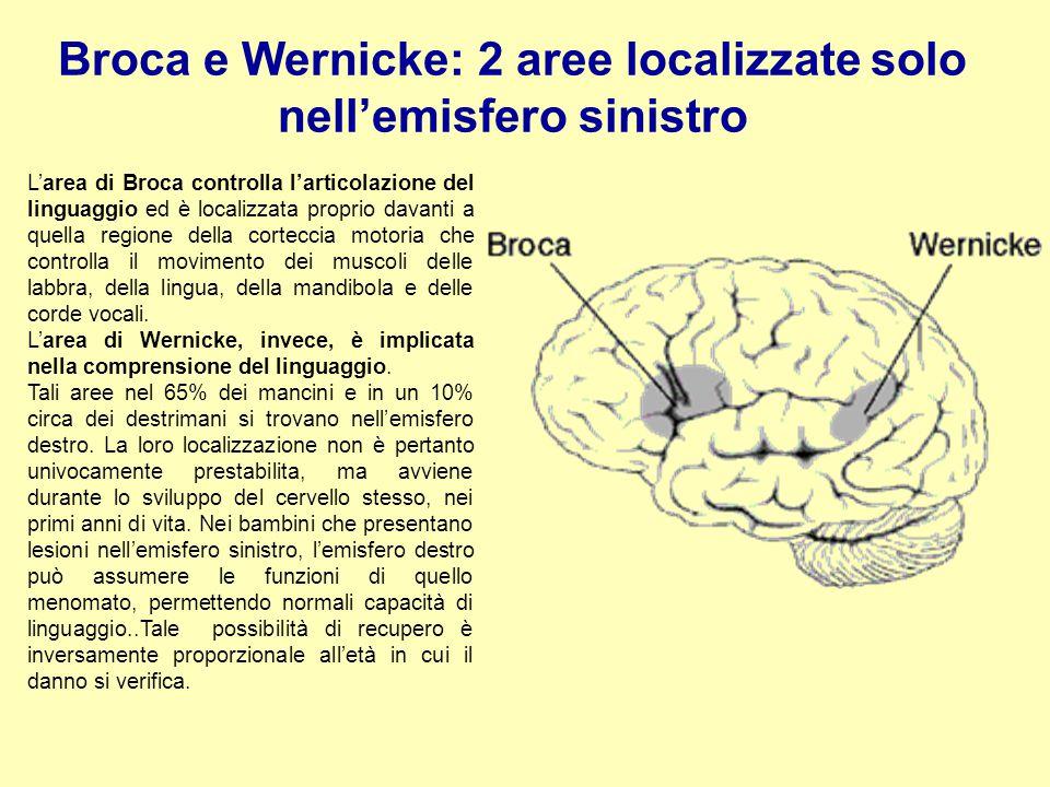 Broca e Wernicke: 2 aree localizzate solo nell'emisfero sinistro L'area di Broca controlla l'articolazione del linguaggio ed è localizzata proprio dav