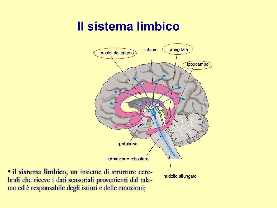 Il sistema limbico