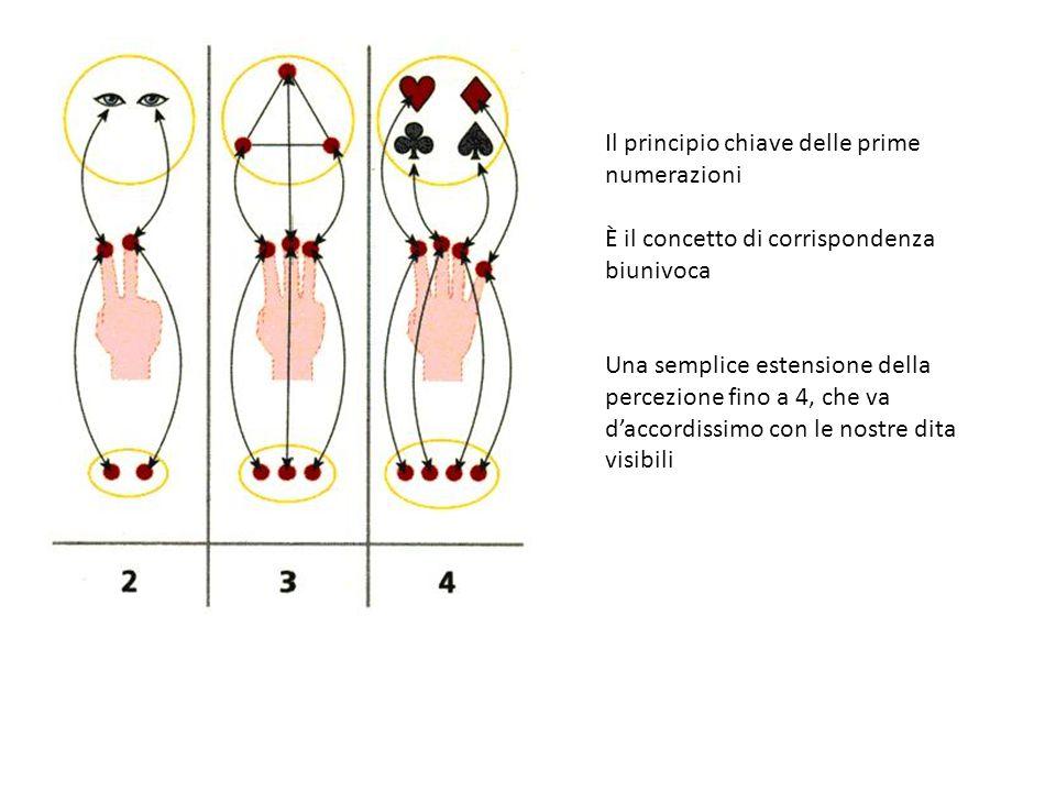 Il principio chiave delle prime numerazioni È il concetto di corrispondenza biunivoca Una semplice estensione della percezione fino a 4, che va d'accordissimo con le nostre dita visibili