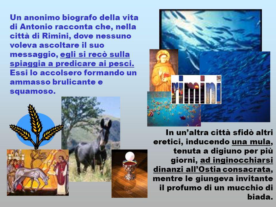 Un anonimo biografo della vita di Antonio racconta che, nella città di Rimini, dove nessuno voleva ascoltare il suo messaggio, egli si recò sulla spia