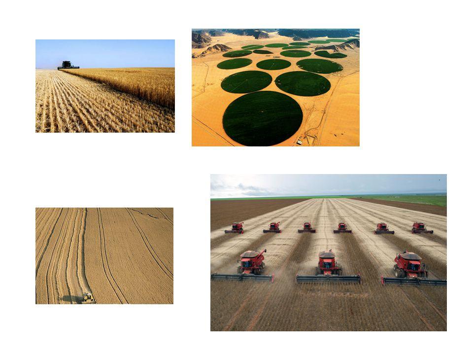 Identificare i sistemi e i metodi per la produzione di cibo per assicurare un futuro sostenibile all'agricoltura e ai coltivatori di tutto il mondo.
