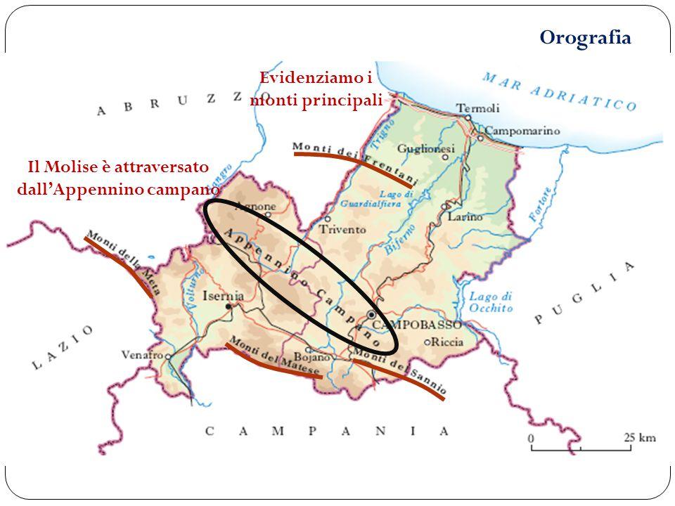 Orografia Il Molise è attraversato dall'Appennino campano Evidenziamo i monti principali