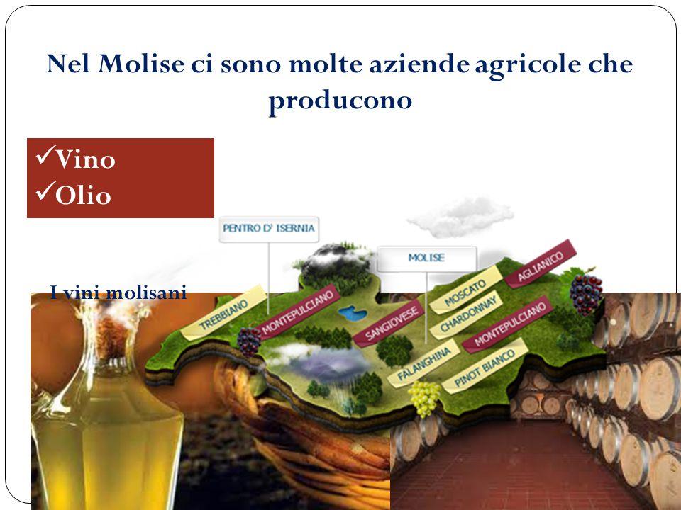 Nel Molise ci sono molte aziende agricole che producono Vino Olio I vini molisani