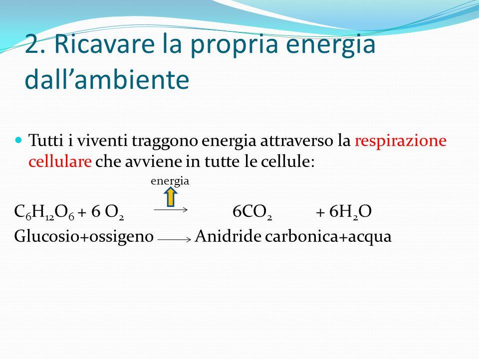 2. Ricavare la propria energia dall'ambiente Tutti i viventi traggono energia attraverso la respirazione cellulare che avviene in tutte le cellule: C