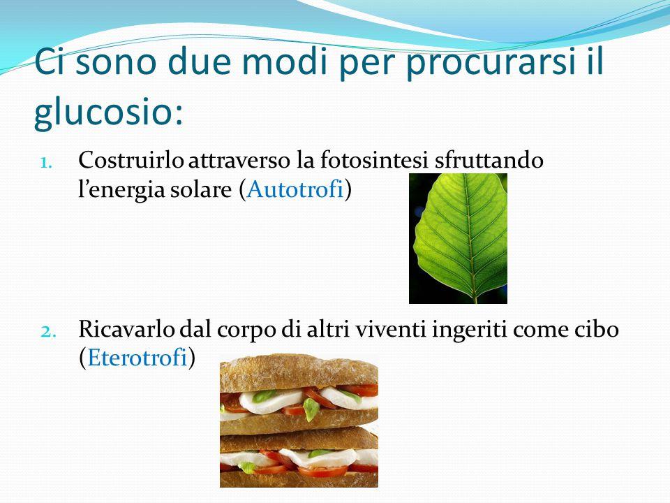 Ci sono due modi per procurarsi il glucosio: 1. Costruirlo attraverso la fotosintesi sfruttando l'energia solare (Autotrofi) 2. Ricavarlo dal corpo di