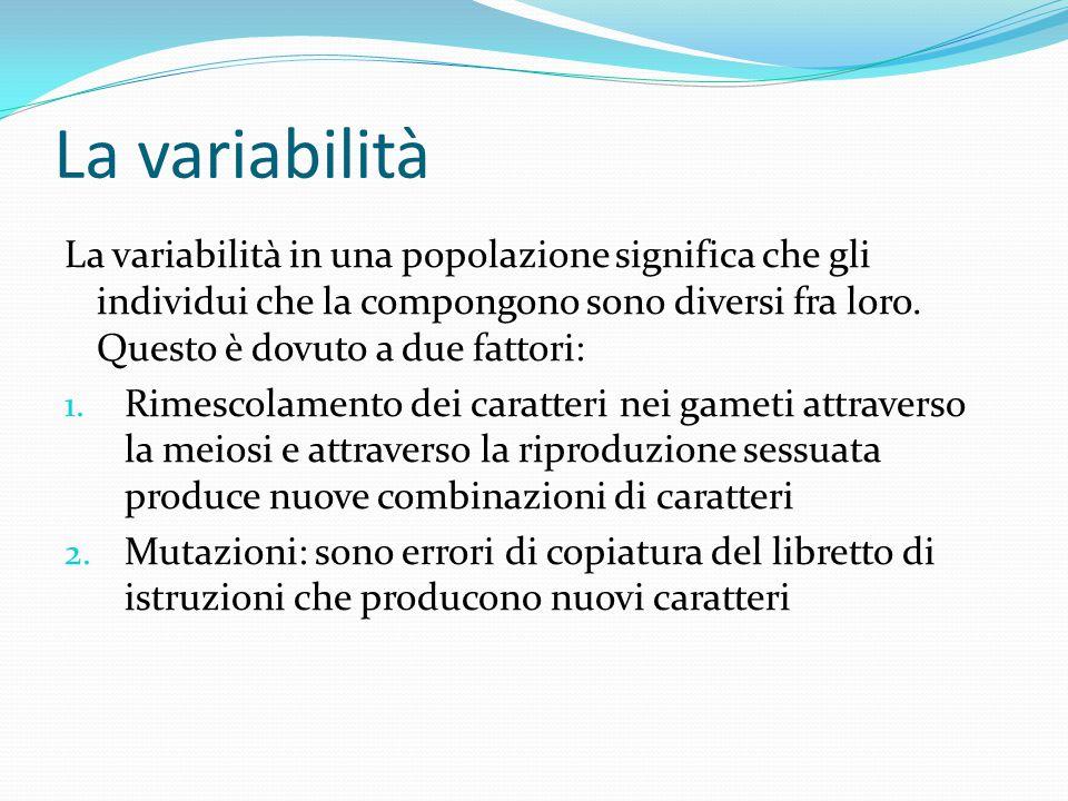 La variabilità La variabilità in una popolazione significa che gli individui che la compongono sono diversi fra loro. Questo è dovuto a due fattori: 1