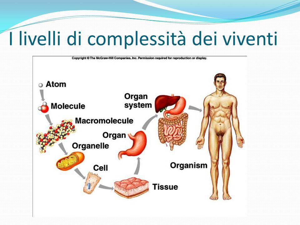 I livelli di complessità dei viventi