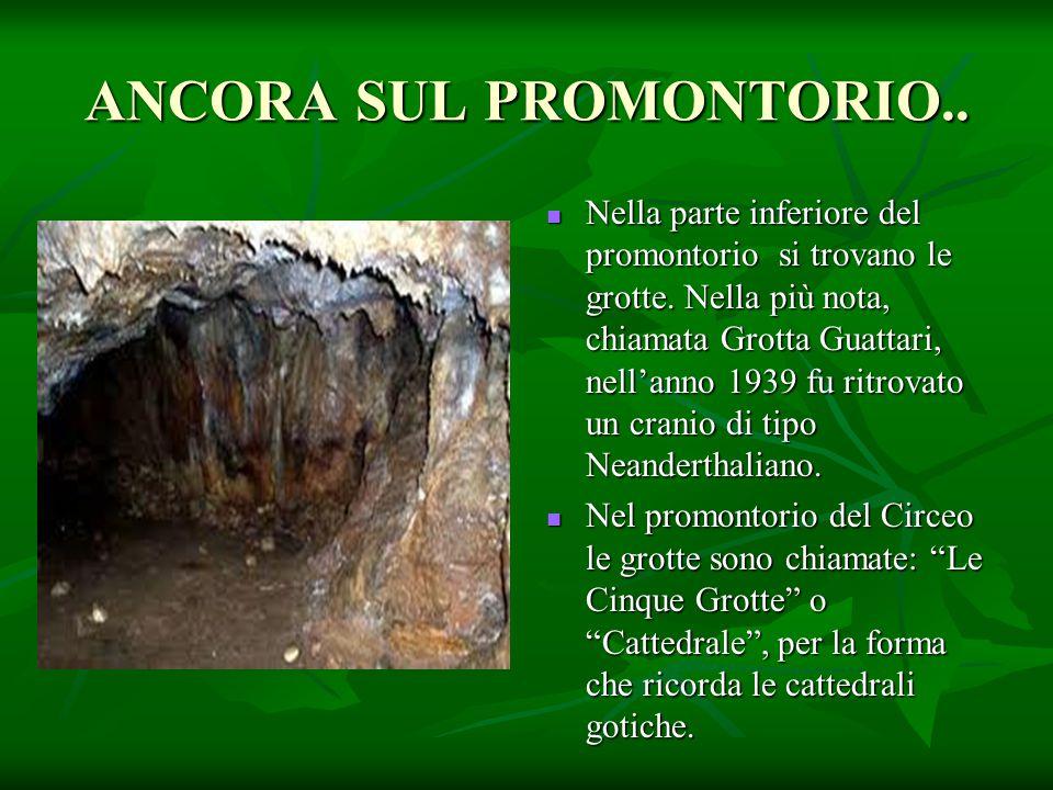 ANCORA SUL PROMONTORIO.. Nella parte inferiore del promontorio si trovano le grotte. Nella più nota, chiamata Grotta Guattari, nell'anno 1939 fu ritro