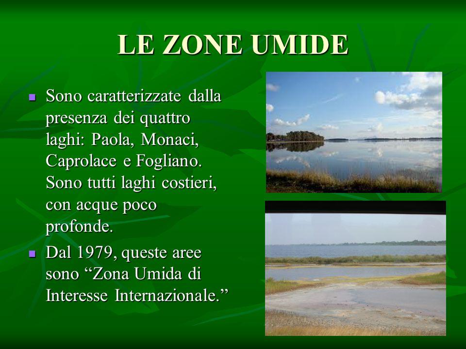 LE ZONE UMIDE Sono caratterizzate dalla presenza dei quattro laghi: Paola, Monaci, Caprolace e Fogliano. Sono tutti laghi costieri, con acque poco pro