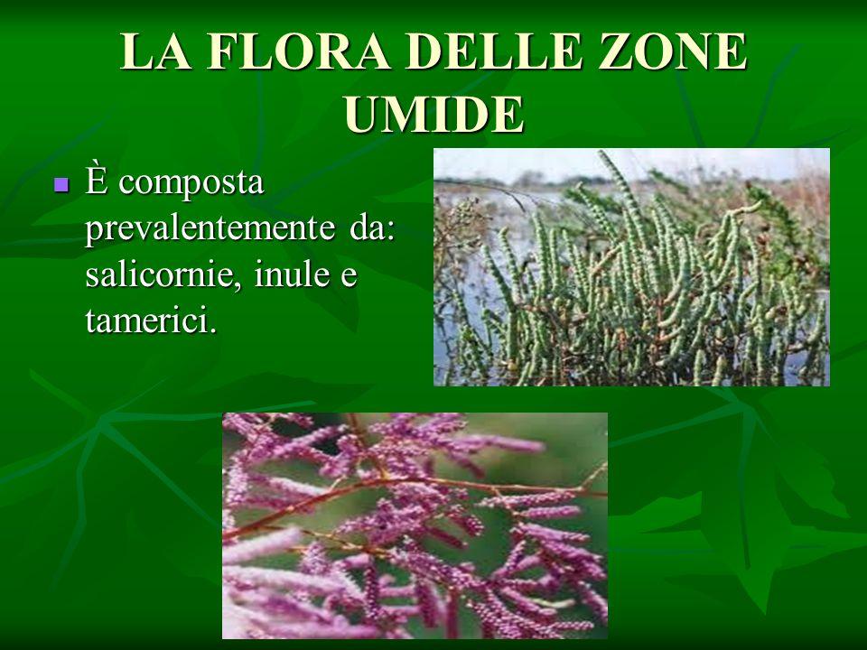 LA FLORA DELLE ZONE UMIDE È composta prevalentemente da: salicornie, inule e tamerici. È composta prevalentemente da: salicornie, inule e tamerici.