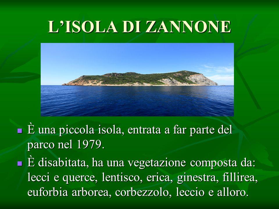 L'ISOLA DI ZANNONE È una piccola isola, entrata a far parte del parco nel 1979. È una piccola isola, entrata a far parte del parco nel 1979. È disabit