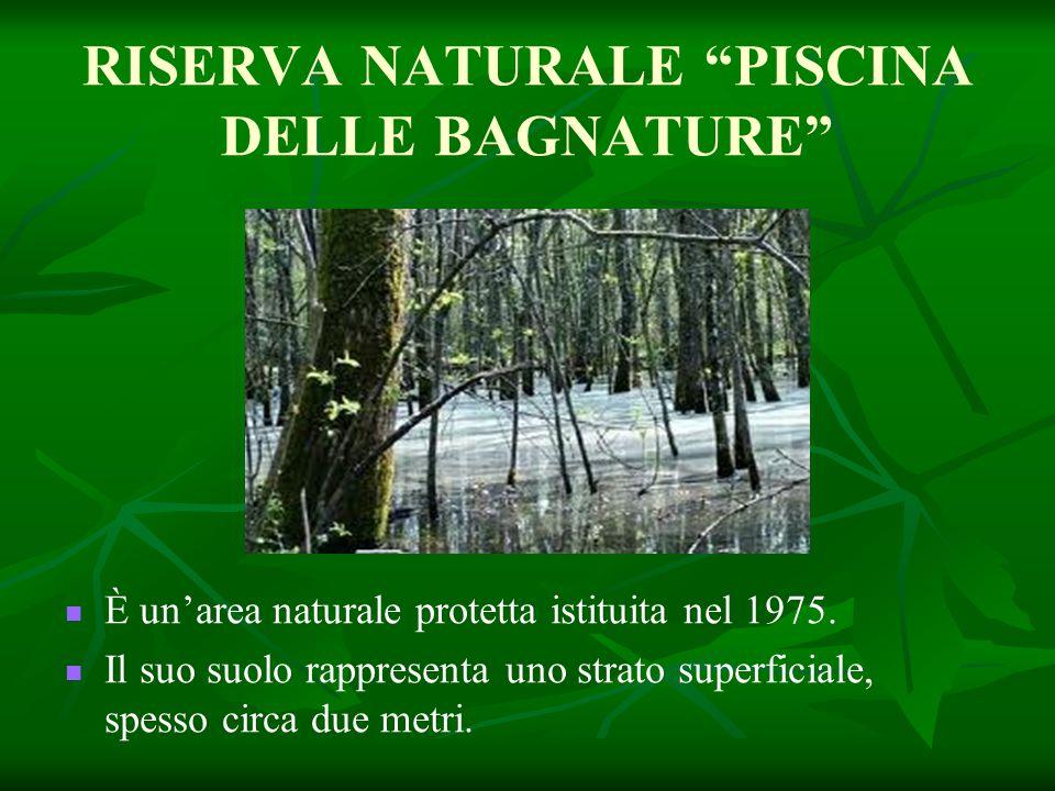 """RISERVA NATURALE """"PISCINA DELLE BAGNATURE"""" È un'area naturale protetta istituita nel 1975. Il suo suolo rappresenta uno strato superficiale, spesso ci"""