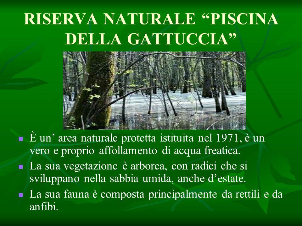 """RISERVA NATURALE """"PISCINA DELLA GATTUCCIA"""" È un' area naturale protetta istituita nel 1971, è un vero e proprio affollamento di acqua freatica. La sua"""