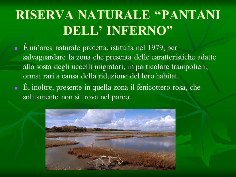 """RISERVA NATURALE """"PANTANI DELL' INFERNO"""" È un'area naturale protetta, istituita nel 1979, per salvaguardare la zona che presenta delle caratteristiche"""