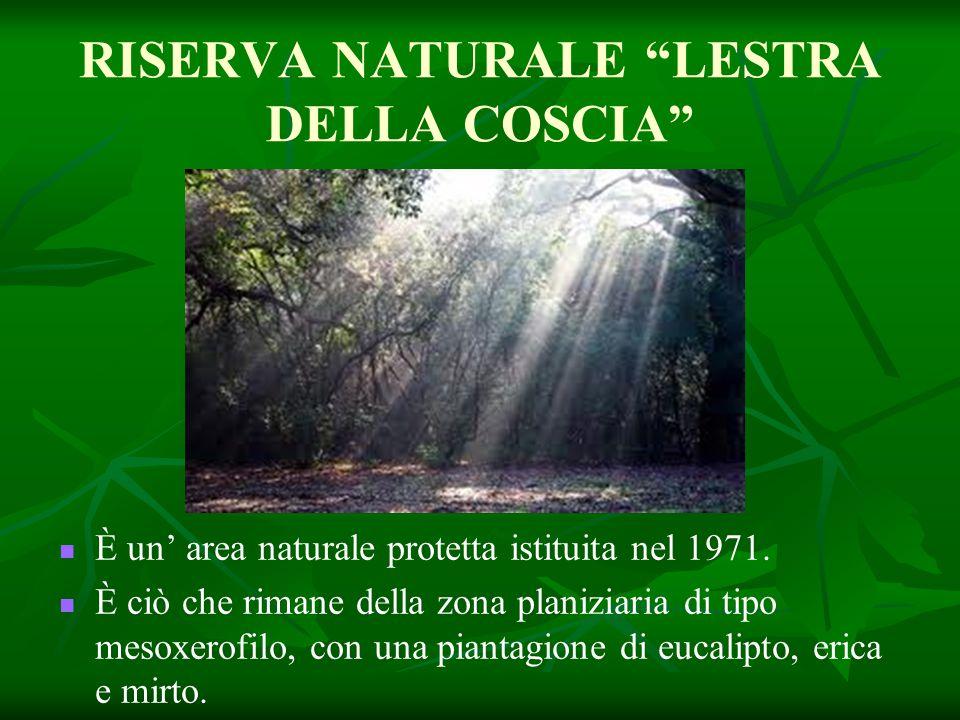 """RISERVA NATURALE """"LESTRA DELLA COSCIA"""" È un' area naturale protetta istituita nel 1971. È ciò che rimane della zona planiziaria di tipo mesoxerofilo,"""